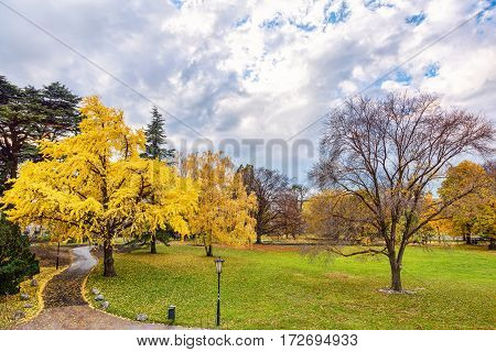 Golden autumn with yellow trees and leaves at stadpark in Vienna, Austria, walking road, rainy day with blue sky
