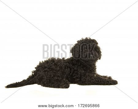 Black labradoodle puppy lying on the floor seen from the side isolated on a white background
