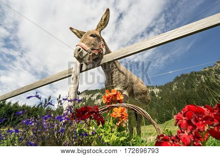 Funny donkey is waiting to get fed with beautiful flowers.
