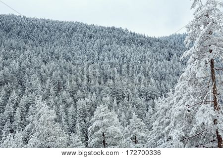 snow covered beautiful forest in mountains landscape