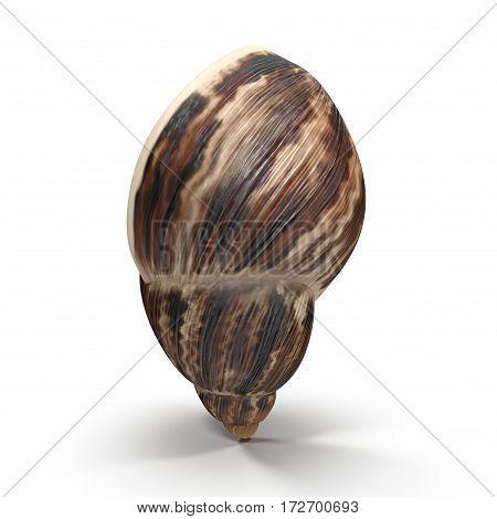 Marginata Shell on white background. 3D illustration