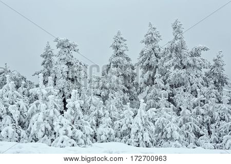 Panorama of the snowy winter landscape in the mountains- Natural landscape