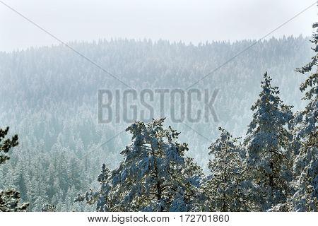 winter foggy snowy landscape in mountains landscape