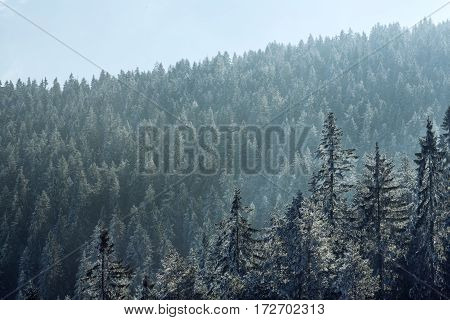 view of the sunny morning on the winter mountains landscape