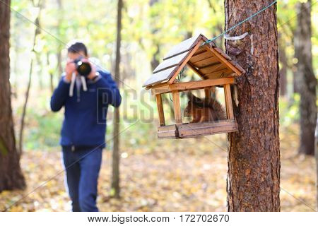 Man (out of focus) shoots wild squirrel in wooden feeder in sunny autumn forest