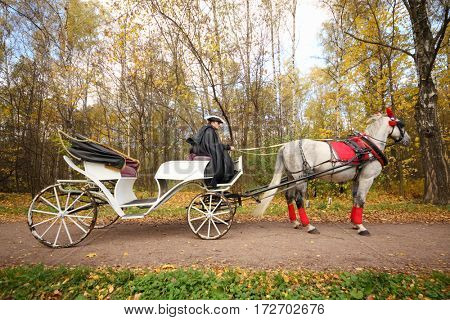 Coachman sits in coach with horse and holds reins in autumn forest