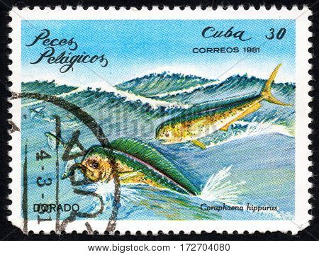 UKRAINE - CIRCA 2017: A stamp printed in Cuba shows a fish Dorado Coruphaena hippuru the series Pelagic Fish circa 1981