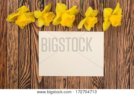 Fresh  spring yellow  daffodils  flowers and empty tag on a brown painted wooden planks. Selective focus. Place for text.