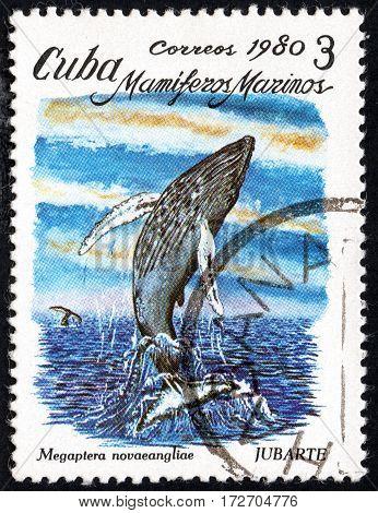 UKRAINE - CIRCA 2017: A stamp printed in Cuba shows a whale Humpback Megaptera novaeangliae the series Sea mammals circa 1980