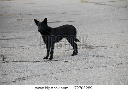 Black homeless dog in the city park