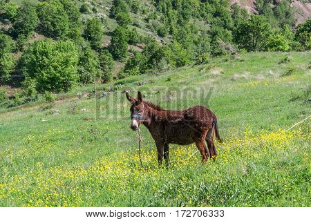 Cute brown donky on grass green medow