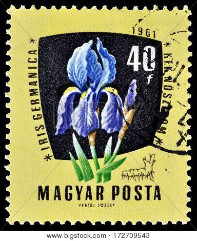 HUNGARY - CIRCA 1961 : Cancelled postage stamp printed by Hungary, that shows German Iris.