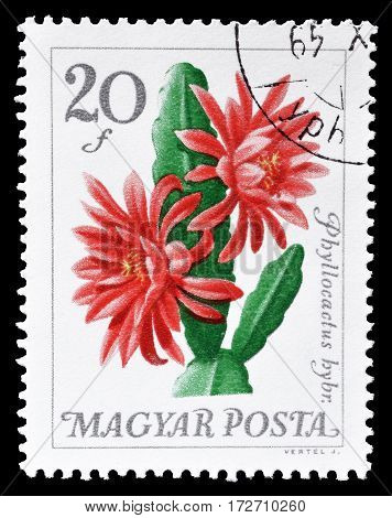 HUNGARY - CIRCA 1965 : Cancelled postage stamp printed by Hungary, that shows Leaf Cacti.
