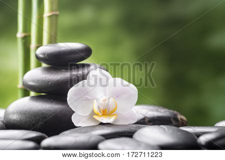 zen basalt stones orchid and bamboo
