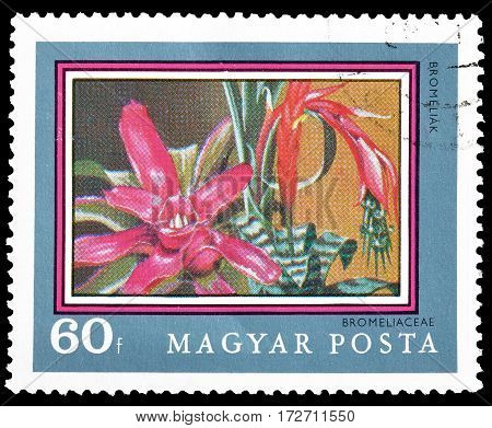 HUNGARY - CIRCA 1971 : Cancelled postage stamp printed by Hungary, that shows Bromeliad.