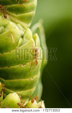 Close Up Image of a fire ant on a greeen plant