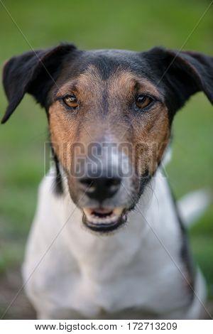 Dog portrait outdoors, cute terrier dog in garden