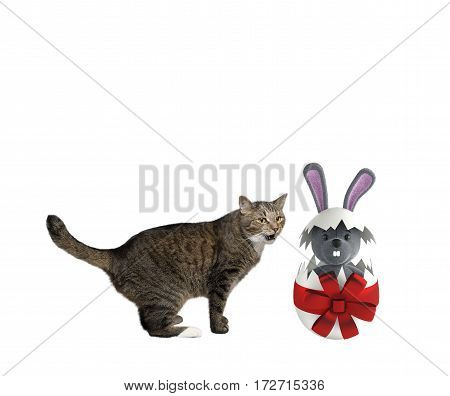 cute happy playing Cat with easter egg rabbit isolated on white background