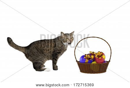 cute happy playing Cat with easter eggs isolated on white backrgound
