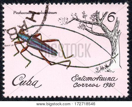 UKRAINE - CIRCA 2017: A stamp printed in Cuba shows a insect Pinthocoelium columbium the series Entomofauna circa 1980