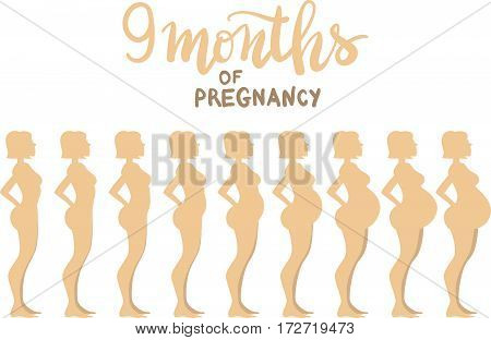 Stages Of Pregnancy 9 Months. Woman Side View. Cartoon Vector Illustration. Inscription: