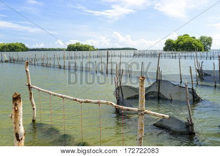 Oyster hatchery in a bay of the caribbean sea