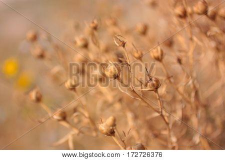 Sunset. Grass On Sandy Beach. Background Selective focus