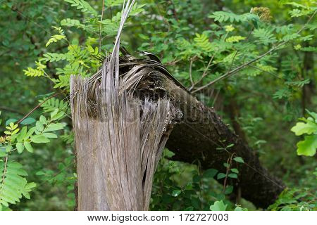 closeup of a broken tree in a spring forest
