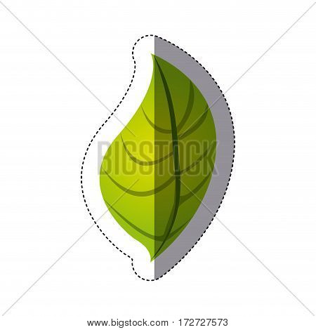 color sticker silhouette with green oval leaf vector illustration