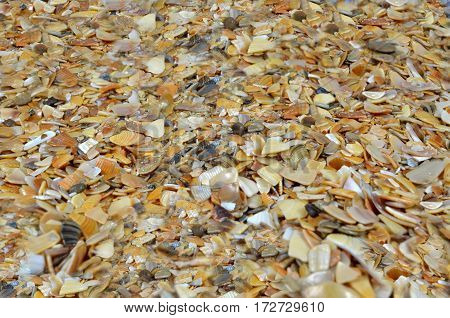 Coquina - fragment of beach. Summer, sea. Background