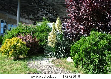 Anapa, Russia: Coniferous and deciduous plants, yucca bush blooming in park on seafront promenade in rays of southern blinding midday sun