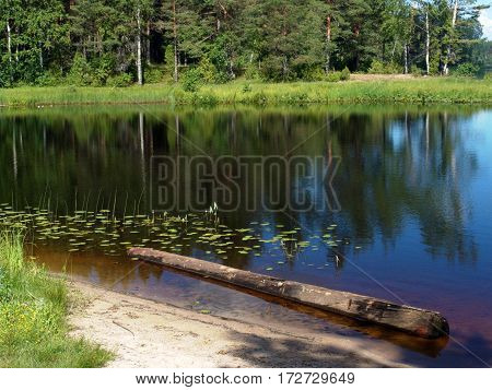 Old wooden timber lying in water in shallow sandy lake beach. Good for fishing