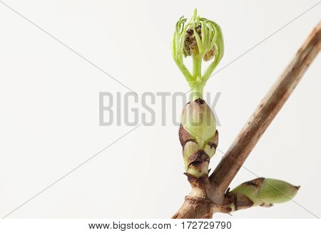 Green Blossoming Leaves On The Branches