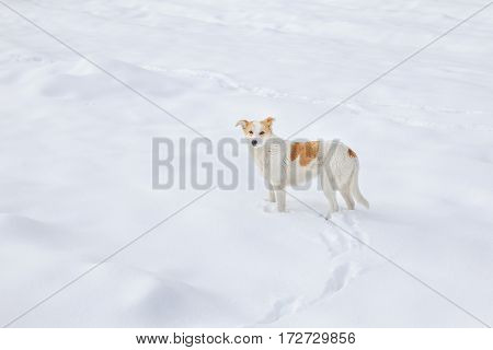 dog standing on the snow in the winter