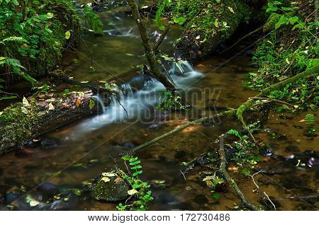 A small waterfall in a stream of water in the forest.
