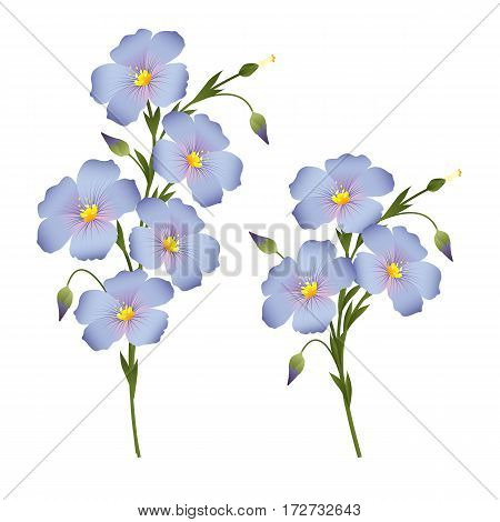 Two sprigs of flowering flax design element for labels packaging