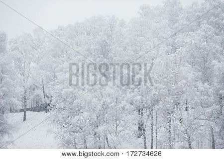 Fairy winter forest in the snow. Winter time. Heavy snowfall. Trees in the snow. Beautiful landscape. The trunks and branches of trees under snow.