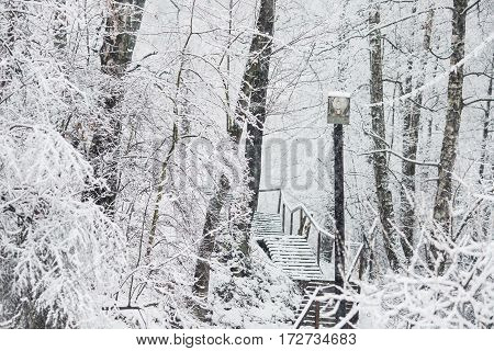Fairy winter forest in the snow. Winter time. Heavy snowfall. Trees and old lantern in the snow. Beautiful landscape. The trunks and branches of winter trees.
