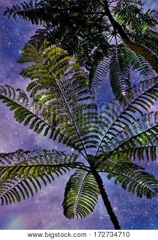 Close up of beautiful Mimosa Tree against the night sky