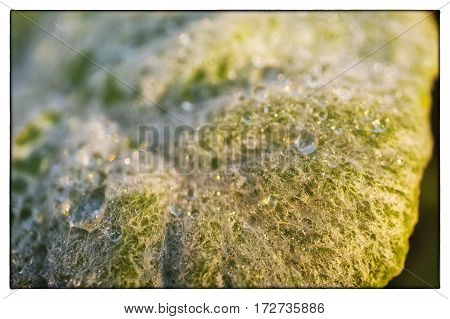 A macro image showing frozen water drops on leaf with texture details