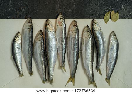 Raw Small Sprat Like Forage Fishes On A Paper With Copy Space On The Top
