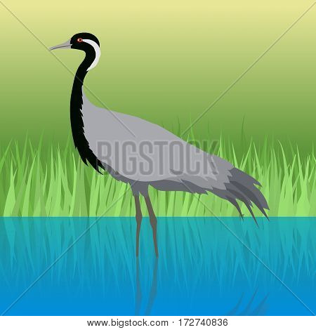 Demoiselle crane vector. Water birds wildlife concept in flat style design. Eurasia fauna illustration for encyclopedia, childrens books illustrating. Beautiful crane bird standing in river.