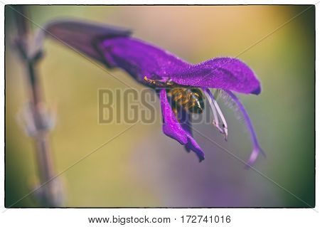 Honeybee collecting nectar on a purple flower in the Botanical Gardens