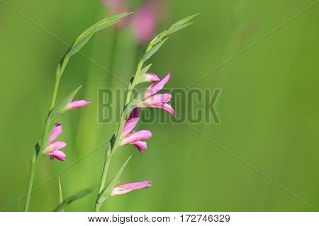 Close up shot of tiny pink flowers