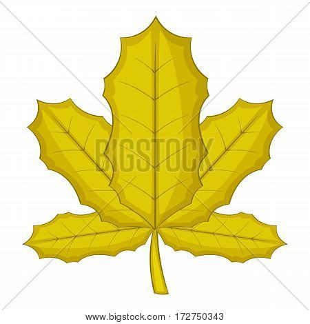 Sycamore leaf icon. Cartoon illustration of sycamore vector icon for web