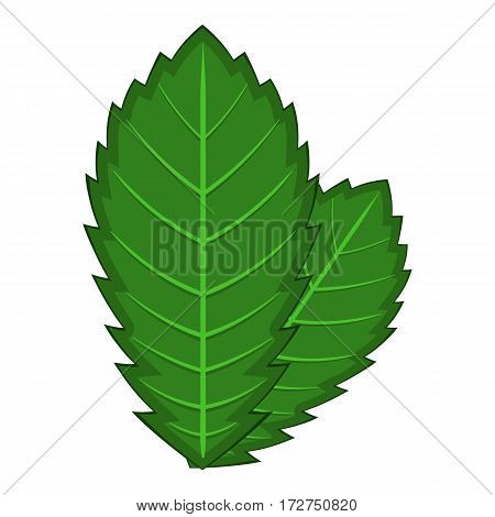 Elm leaf icon. Cartoon illustration of elm leaf vector icon for web