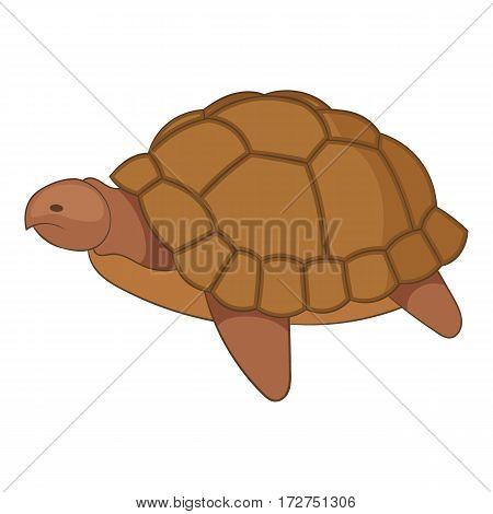 Turtle icon. Cartoon illustration of turtle vector icon for web