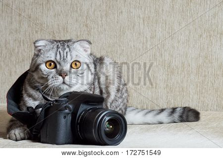 gray tabby cat curious nibbles photo camera