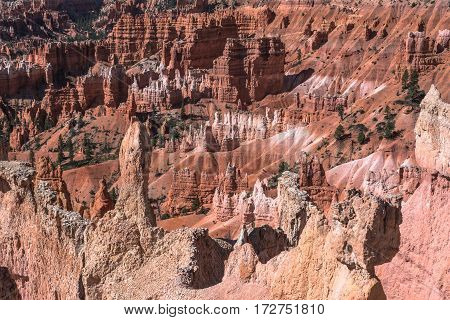 Hoodoos and red rocks  in Bryce Canyon National Park, Utah