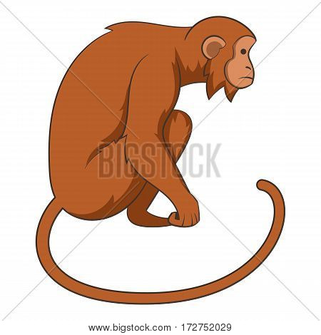 Monkey icon. Cartoon illustration of monkey vector icon for web